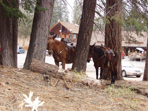 Horse-parking