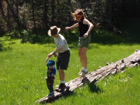 Log in meadow